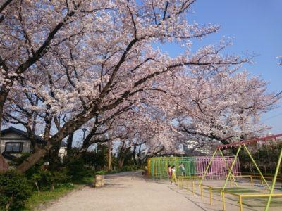 上水公園(桜上水)