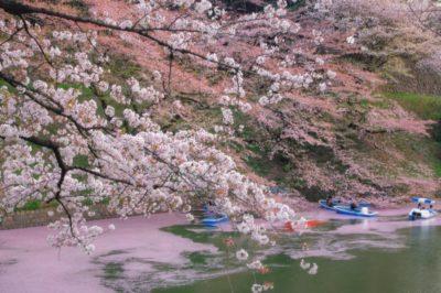 千鳥ヶ淵桜まつり