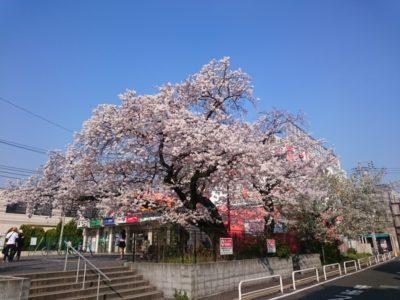 桜上水駅前