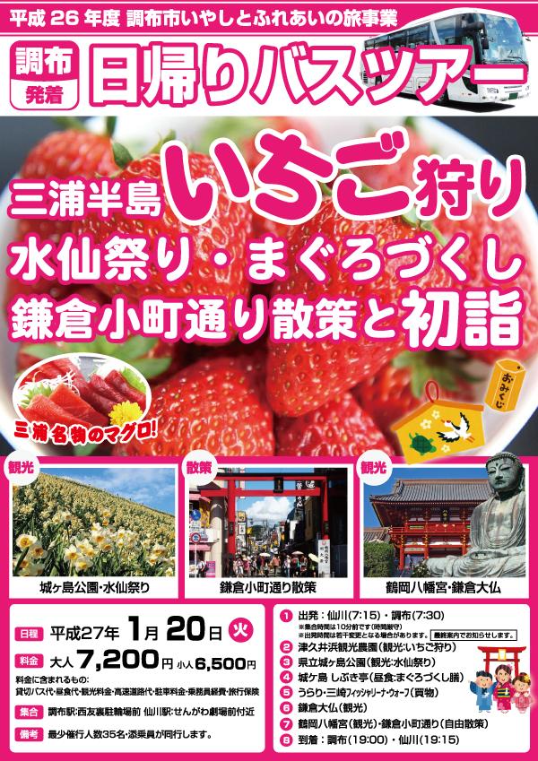 三浦半島いちご狩り 水仙祭り・まぐろづくし 鎌倉小町通り散策と初詣