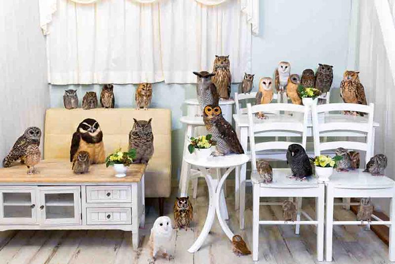 秋葉原の人気のふくろうカフェ〈Owl Cafe Akiba Fukurou〉