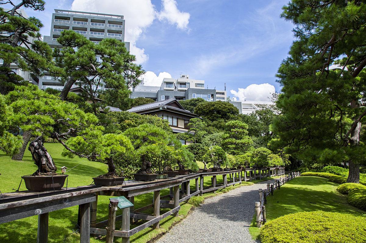 八芳園ガイド庭園散策(VTR)